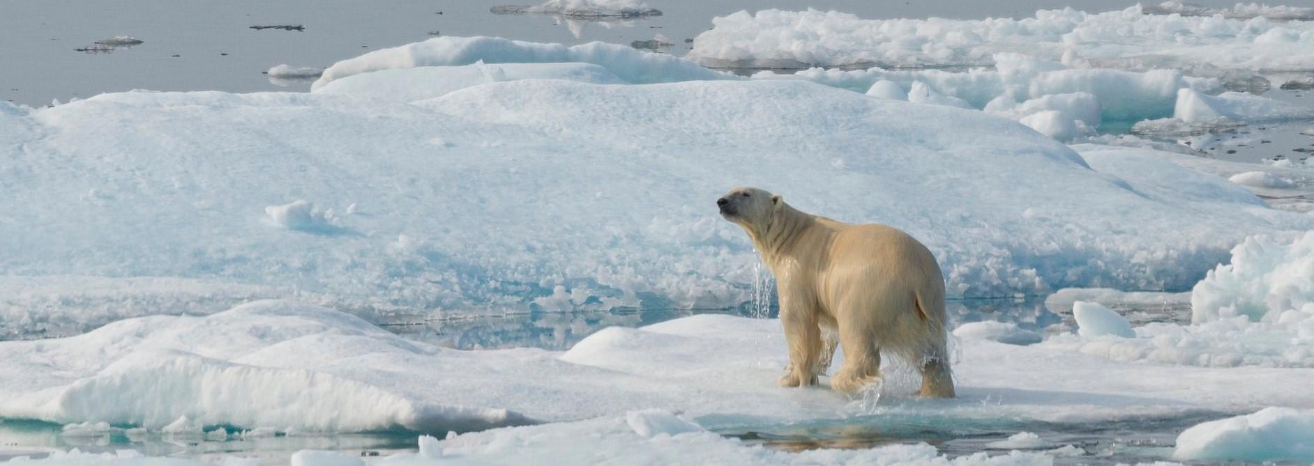Khám phá Nauy - Bắc cực và Băng đảo Iceland